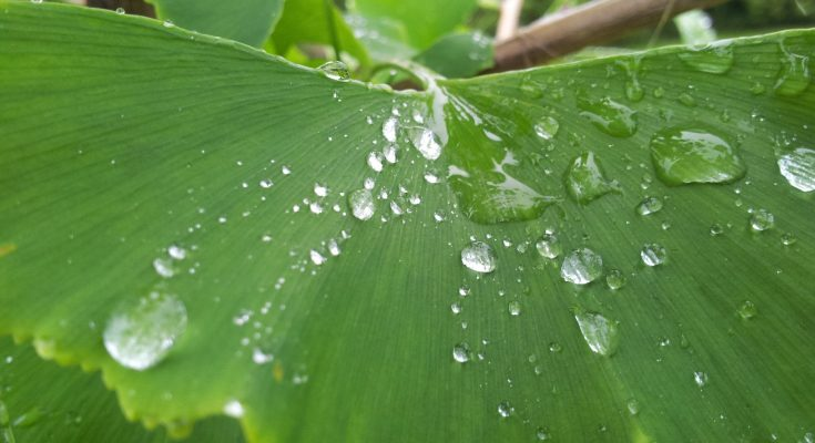 planteskole bramming