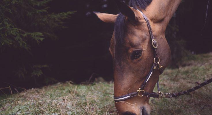hoerstroelse til heste
